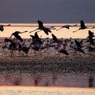 Fenicotteri - Lake Natron -Tanzania