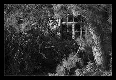 - Fenster -