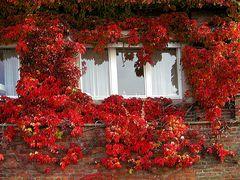Fenster im Herbst