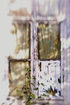 Fenster ins Frühlicht