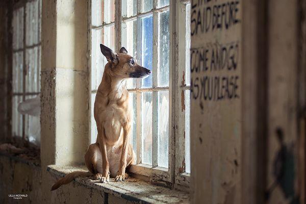 Malinois hunde fotos bilder auf fotocommunity - Fenster mit aussicht ...