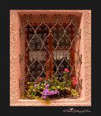 Fenster mit Blumen ein Augenschmaus..