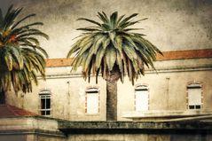 Fenster unter Palmen