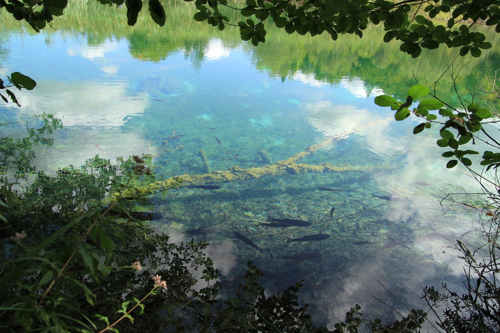 fenster zu den fischen foto  bild  landschaft bach