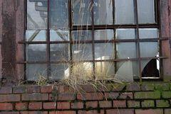 Fenster zur Vergangenheit