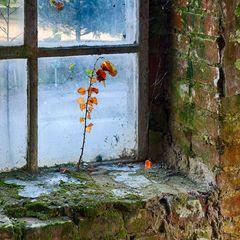 Fensterbäumchen