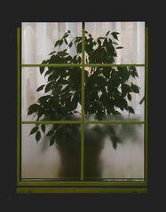 Fensterbehübschung