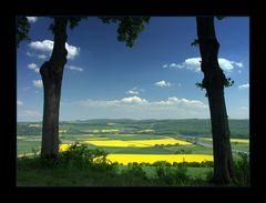 Fensterblick auf blühende Landschaft - (12. DER REIHE: WAS MAN MIT RAPS...)