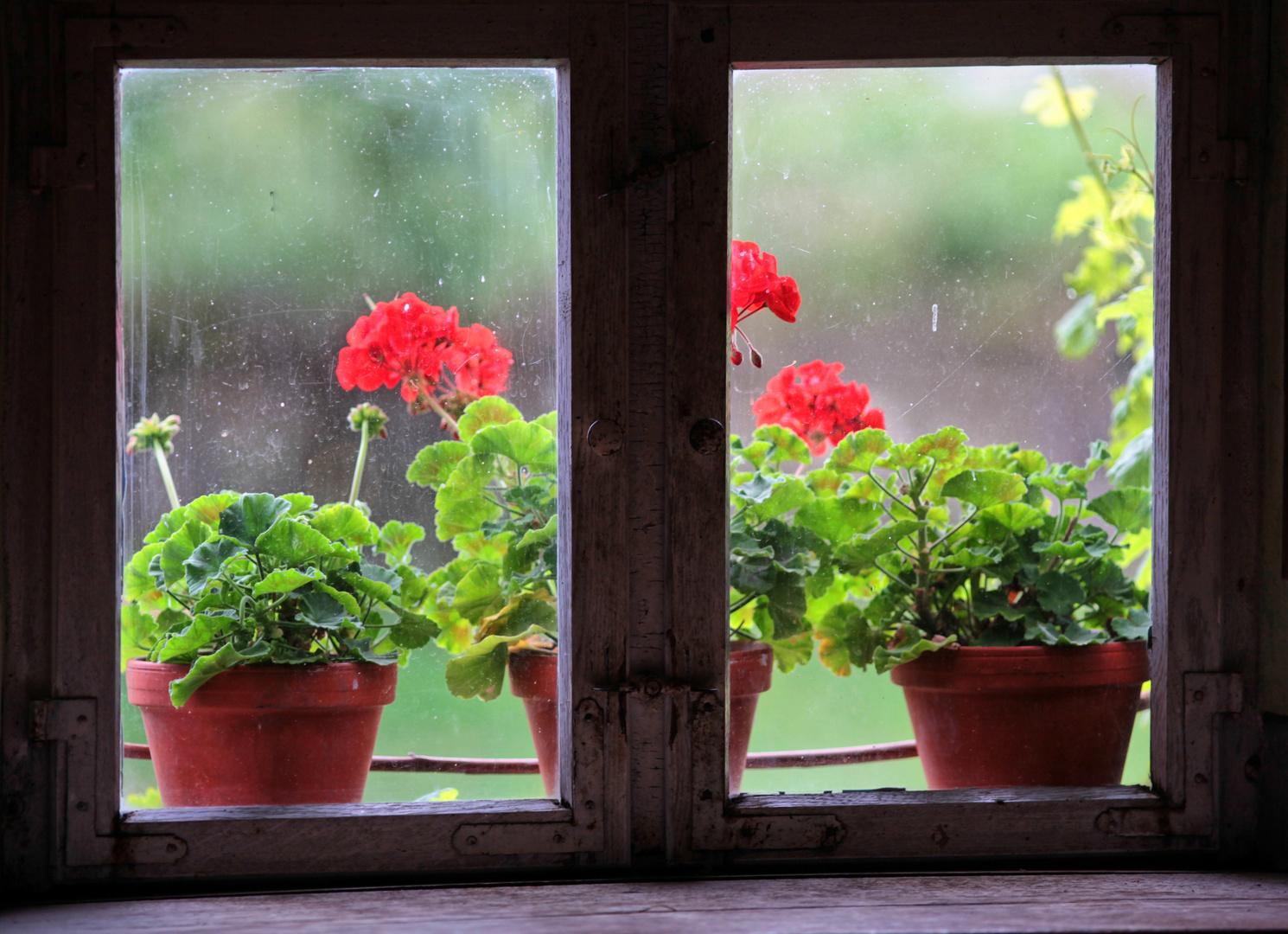 Fenstergeschichten VI