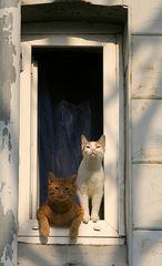 Fensterkatzen