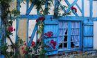 fenêtre aux roses de Picardie