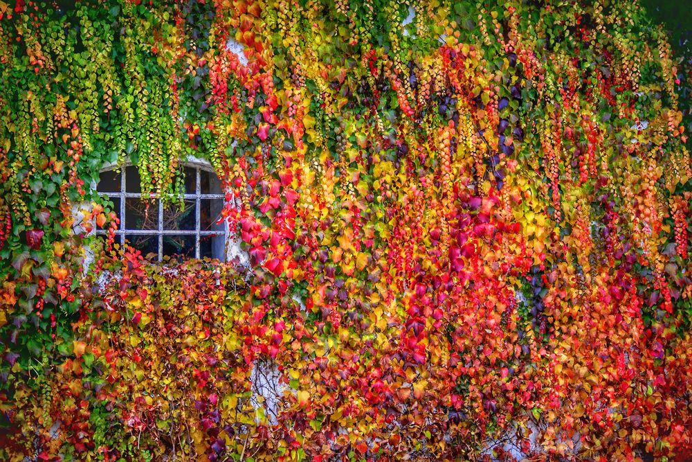 Fenêtre dans les feuilles d'automne