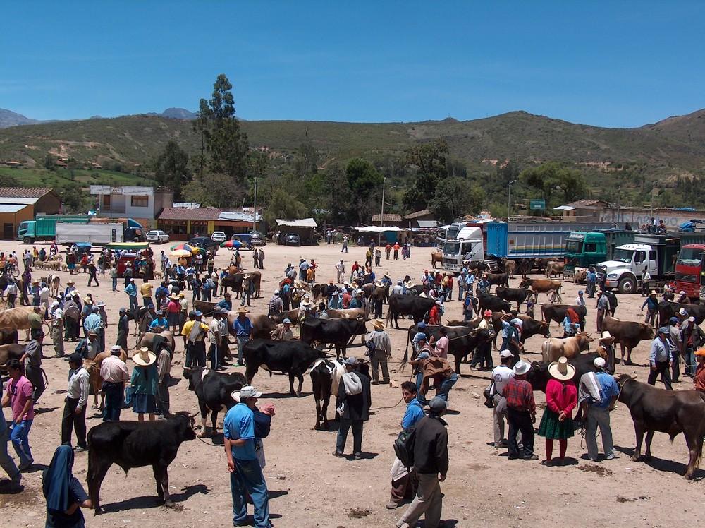 feria pecuaria en San Marcos Cajamarca