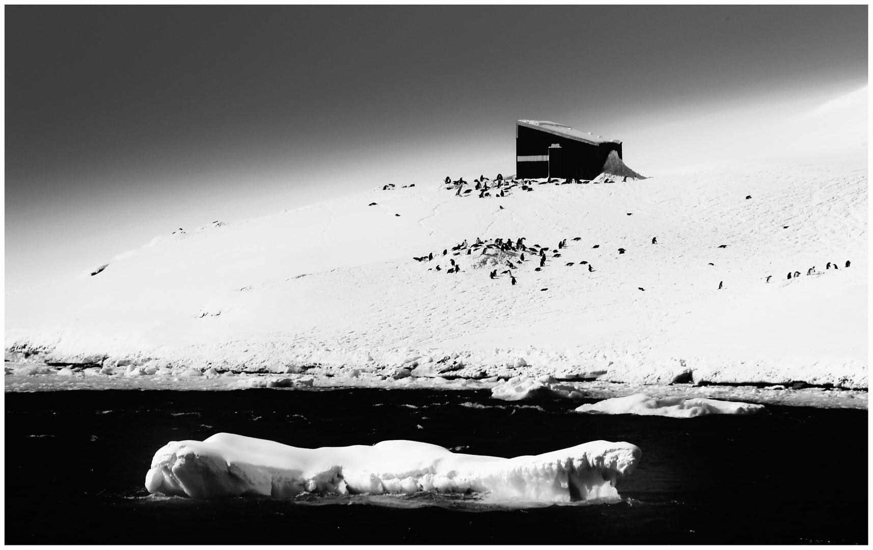 Ferien-Wohnung ... mit Pinguinen ...