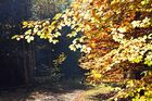 Ferne Hunde im Herbst