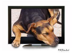 Fernsehhund