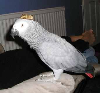 Ferrero Rocher hat