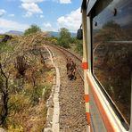 Ferrovia Circumetnea (2)