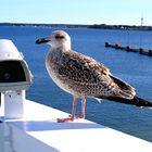 Ferry Tallinn - Helsinki