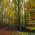 Fesselnde Herbststimmung