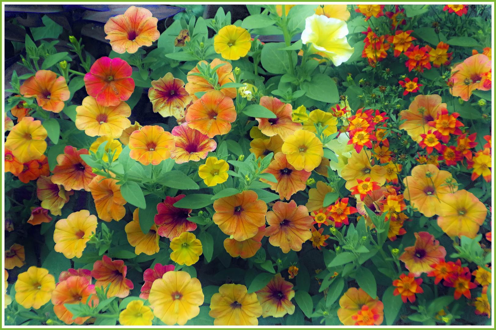 festival di colori  in giardino....