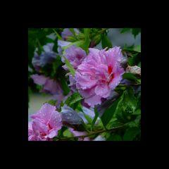 Festplattenblümchen - Hard disk Flowers 1