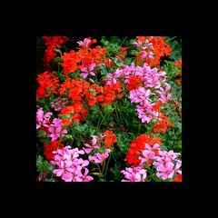 Festplattenblümchen - Hard disk Flowers 3