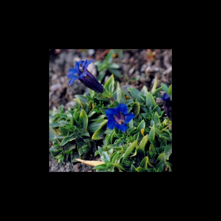Festplattenblümchen - Hard disk Flowers 4