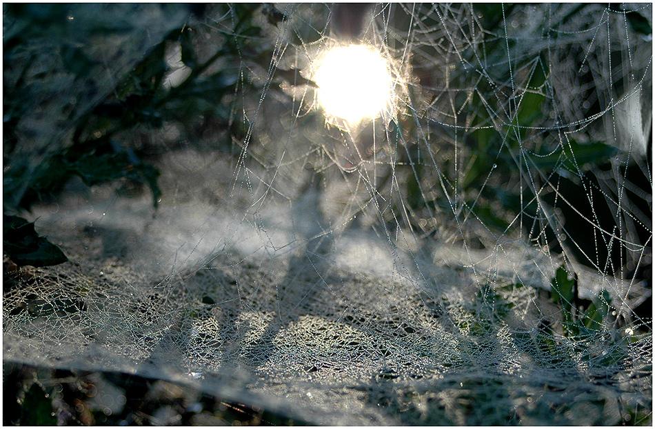 Fette Beute: Sonne im Netz!