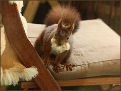 *Fette Beute*...ist nur Lammfell als Nistmaterial fürs Eichhörnchen* (3)