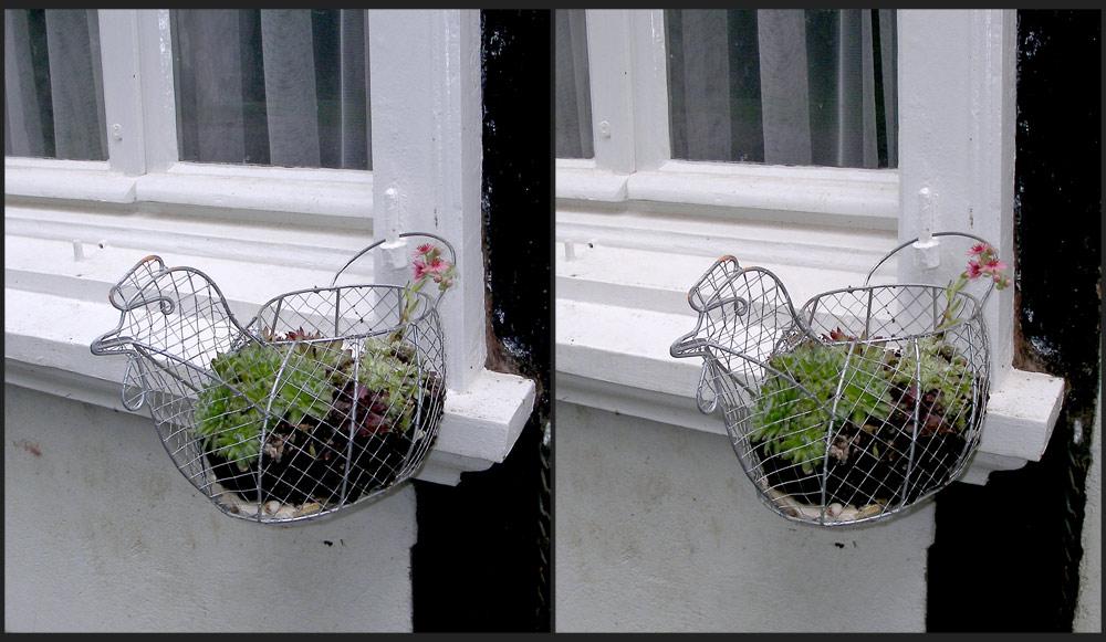 Fette Henne am Fachwerkfenster