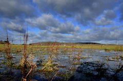 Feuchtwiese auf Hiddensee