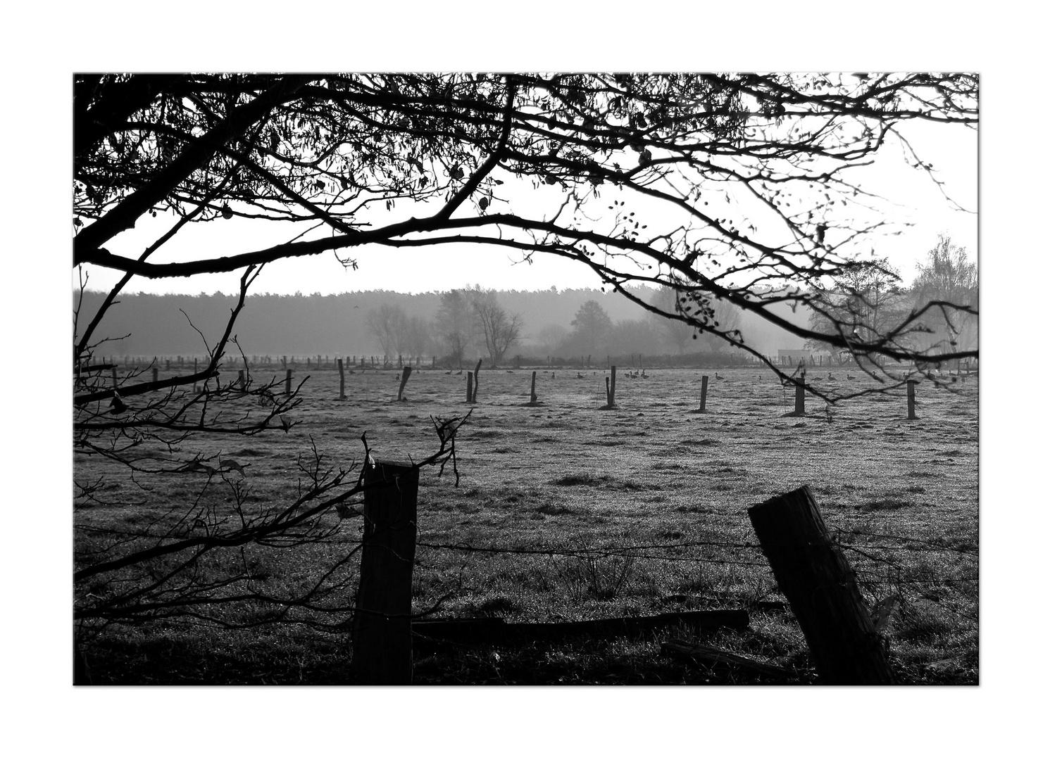Feuchtwiesen im Torfmoor