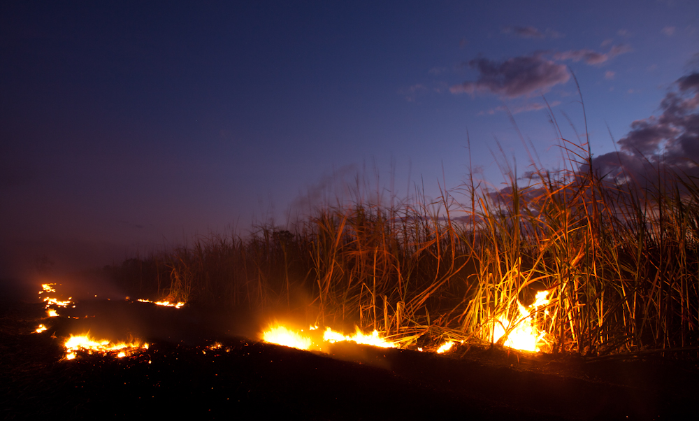Feuer in den Zuckerrohr Feldern von Bunderberg