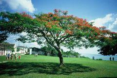 Feuerakazie in der historischen Oberstadt von Porto Seguro/Bahia