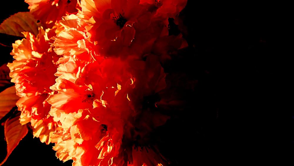 feuerblüten