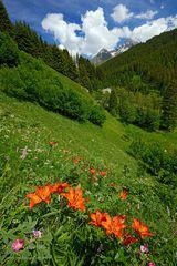Feuerlilien im Bergell
