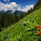 Feuerlilien und Alpenscharten