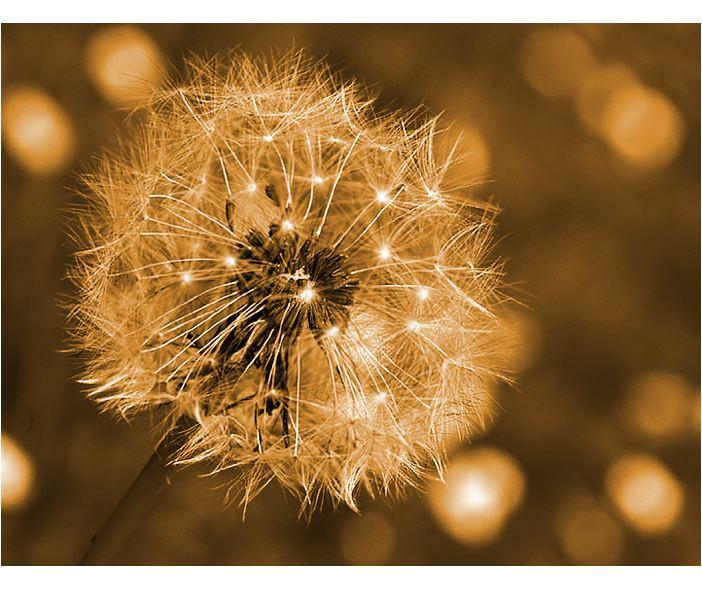 ~Feuerwerk~