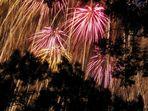 Feuerwerk hinter Bäumen