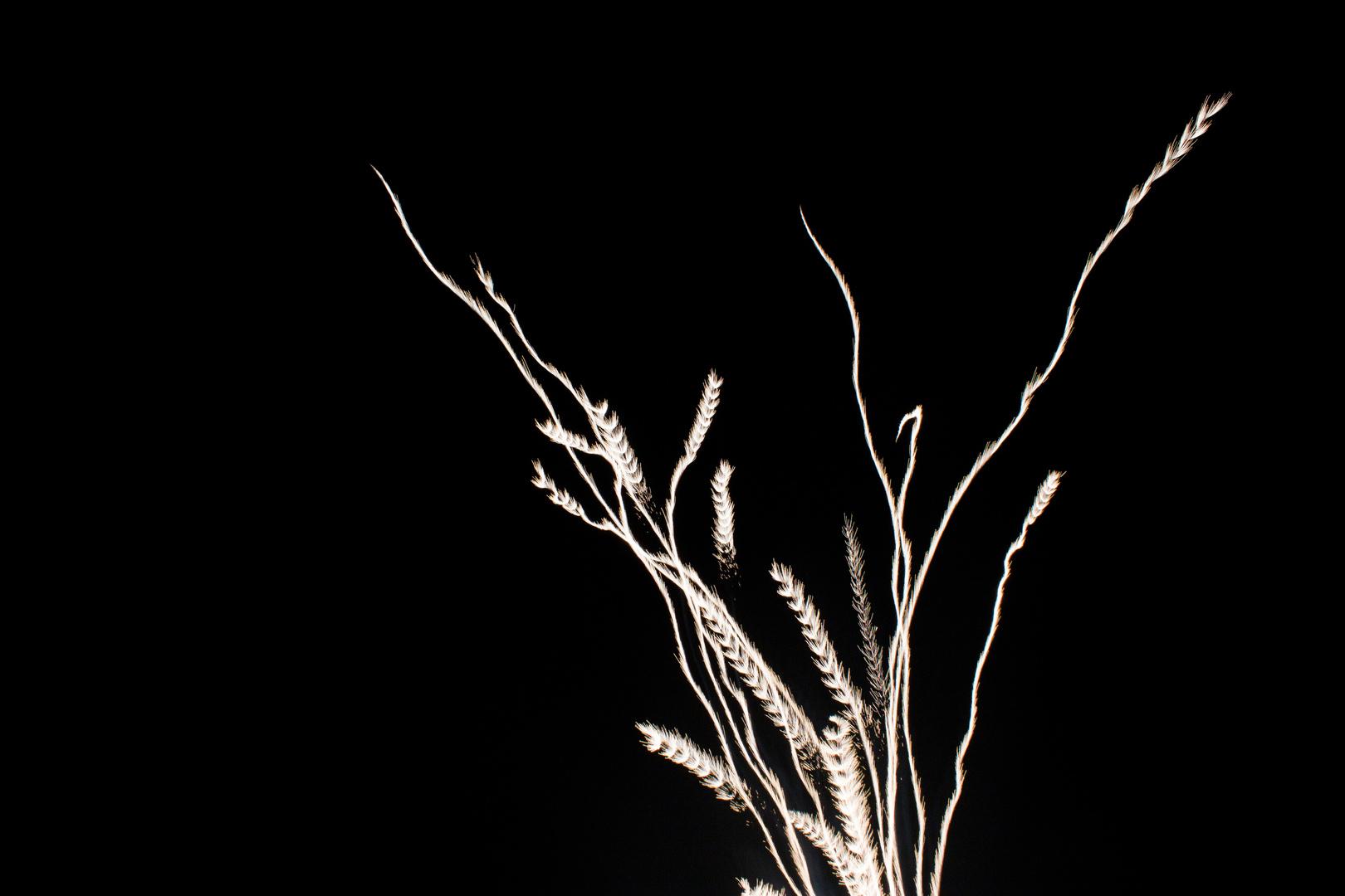 Feuerwerk in Getreide Form