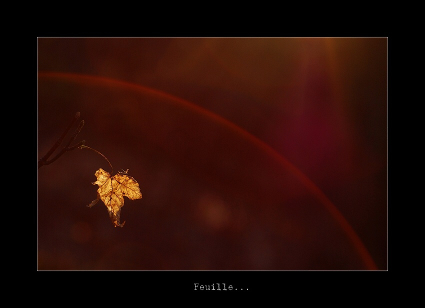 Feuille...