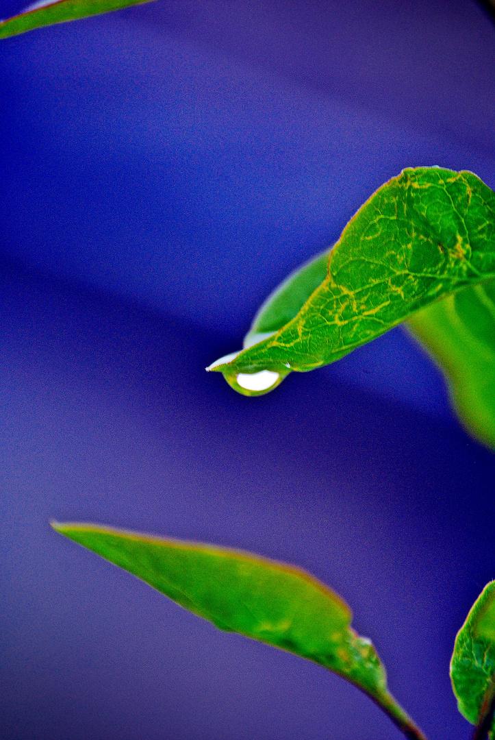 feuille et eau