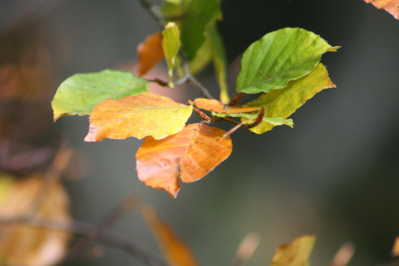 feuilles d'automne. Couleurs d'octobre