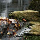 Feuilles mortes au fil de l'eau