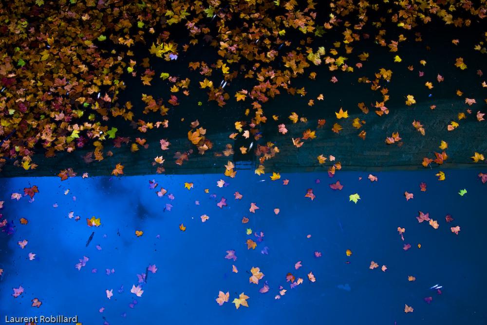 feuilles sur eau
