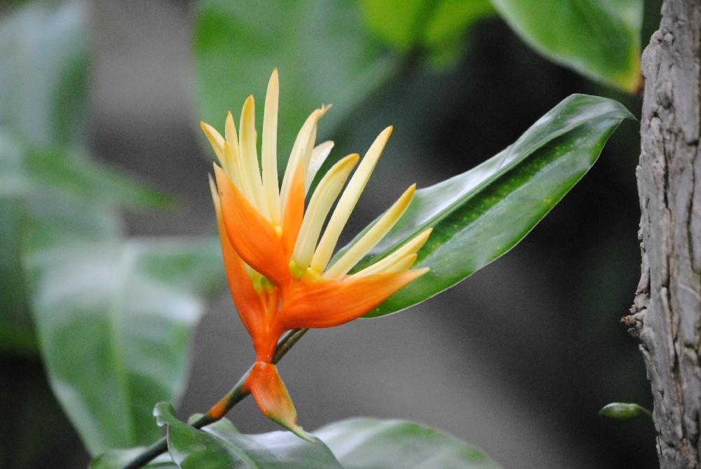 feurige Blüte 2.0