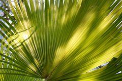 ffm, Palmengarten,....