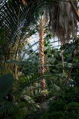 Ffm, Palmengarten