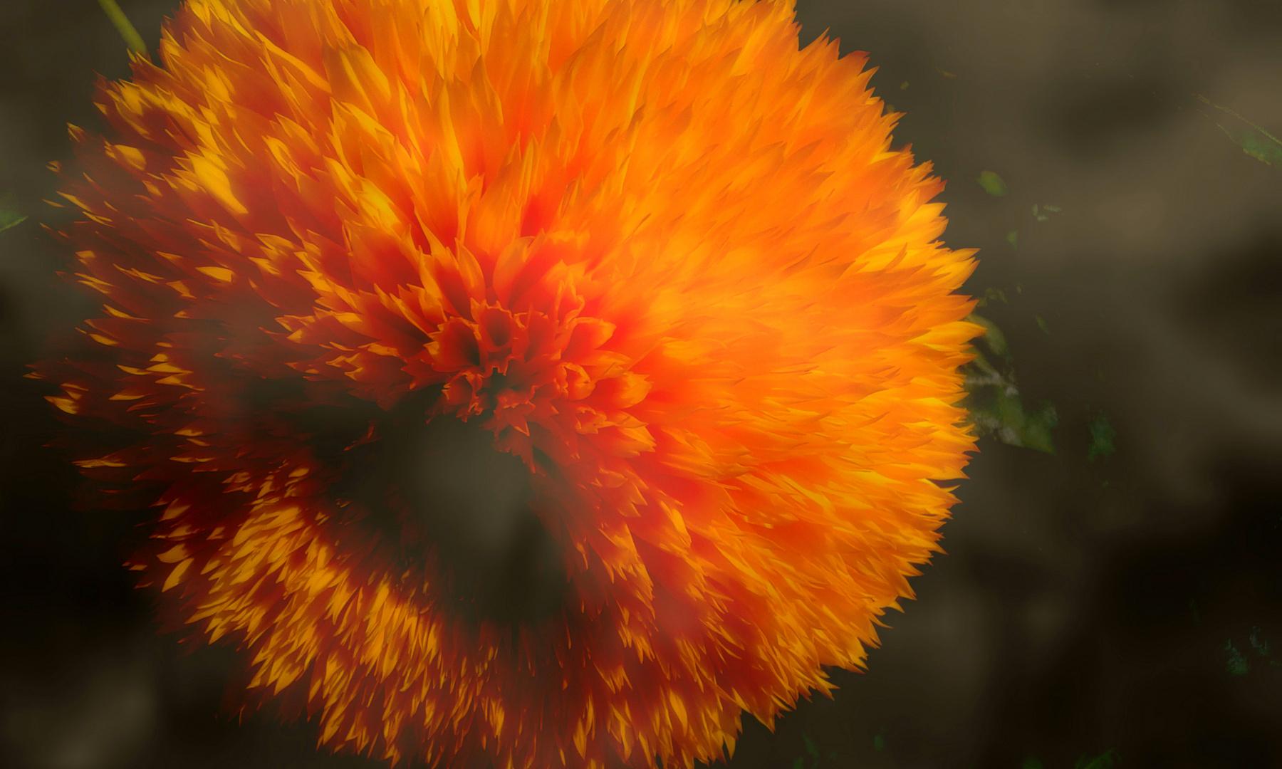 fiamme..e vento..